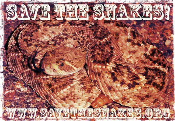 snakes, rattlesnakes, rattlesnake removal, brake for snakes, save the snakes, snake conservation, protect and respect snakes, reptile conservation