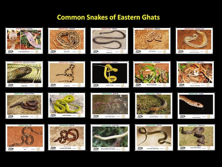 Snake_Poster-1