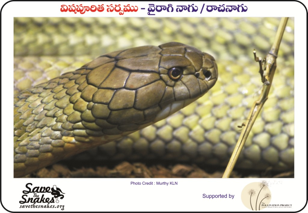 snakes of india, eastern ghats