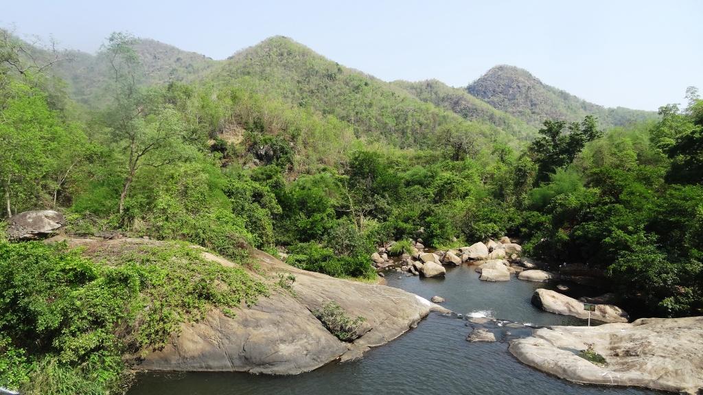 King Cobra Habitat Survey and Community Engagement Program CurrentlyUnderway