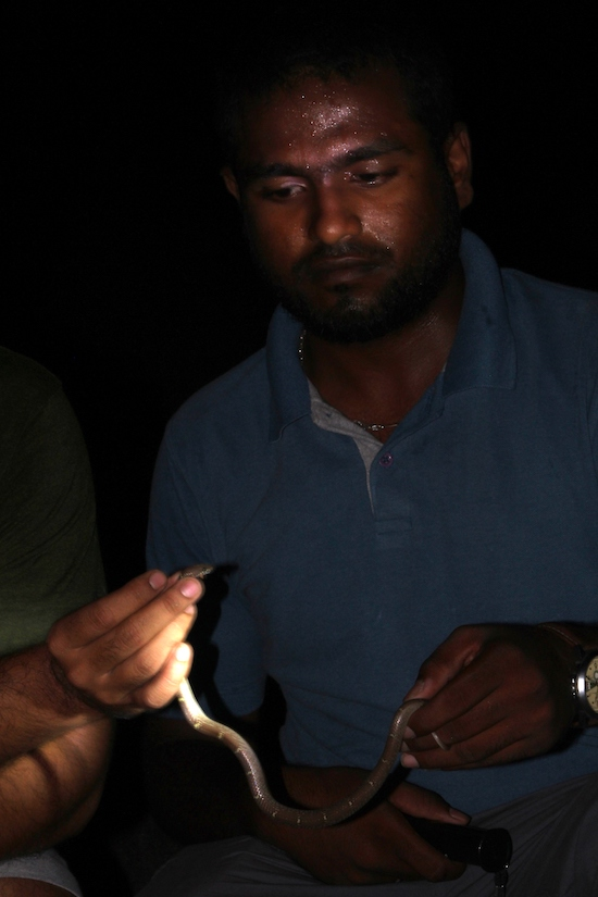 Save The Snakes, Eastern Ghats, Wolf Snake